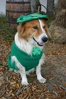 """Bert & PRR wishes everyone a Happy St Patrick's Day"""